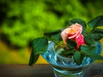 Vase with Lovely Rose
