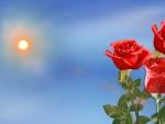 ~*~ Orange Roses ~*~