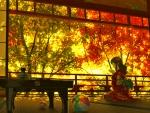 Last Light of Autumn