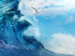 Wave and seagull