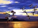 Daybreak Migrating