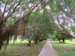 Greenery trail