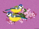 TWO BIRDS ON LILACS