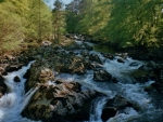fast flowing river through the forest
