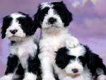 three very cute puppies