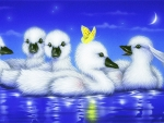 Enjoy Ducklings