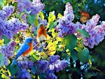 BIRDS on the flowers at SPRING