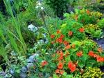 Flowers of My Garden