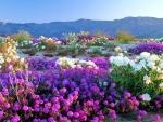 Anza Borrego Desert State-Park California