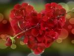 ~*~ Sweet Heart ~*~