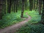 Paths VI.