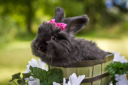 Black rabbit - rabbit, iepure, black, bow, bucket, sweet, cute, green, summer, flower, bunny, rodent, pink