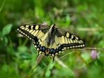 Butterfly on green Plants