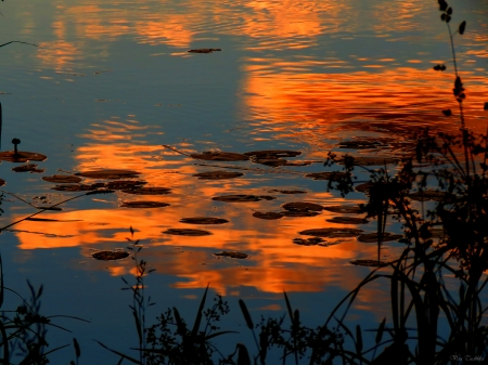 Sunrise - morning, sunrise, summer, pond
