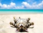 Sunbathing Kitten