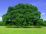 mushroom vert