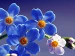 Lovely Orchida