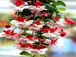Awesome Fuchsia