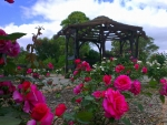Willunga Rose Garden, South Australia
