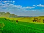 Green Fields in Ibb Yemen