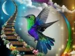 Hummingbird's Path