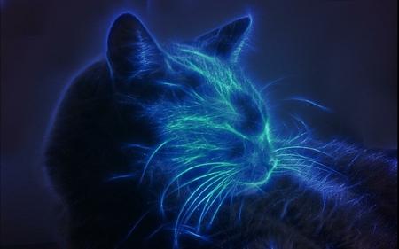 ElectroCat - electrocat, blue