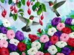 Hummingbirds Heaven