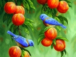 Summer Bluebirds & Peaches