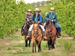 Cowgirl Winery Tour