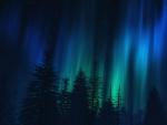 Forest Aurora