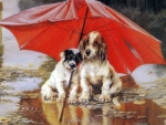 Dogs in the Rain
