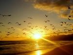 Coast Birds