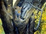 Leopard Juvenile in Tree