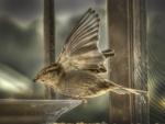*A bird*
