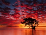 Magical Sunset with Tree