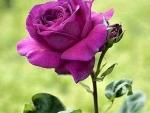 To sweet friend Adi
