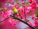 Springtime Singer