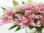 Bouquet of Lily