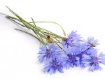 Lovely Lavender Ladybug