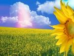 ~*~ Yellow Flowery Field ~*~