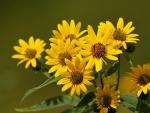 Nice Flowers _ HD