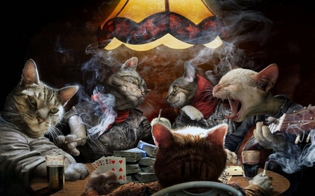 Cats playing poker - drinking, poker, smoking, fun, cat, cats