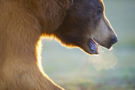 Brown bear - zoo, bear, wild life, animal