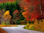 Colorful Autumn Road