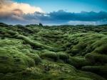 Ireland's Landscape