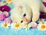 Cute Kitty ♥