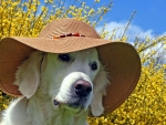 Doggie with hat
