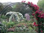 rose garden trellises