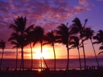 Exotic Beach Sunset