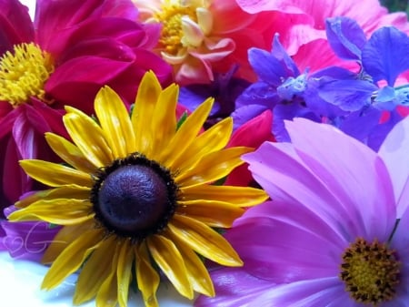 My Colorful flowers - colorful, flowers, nature, beautiful